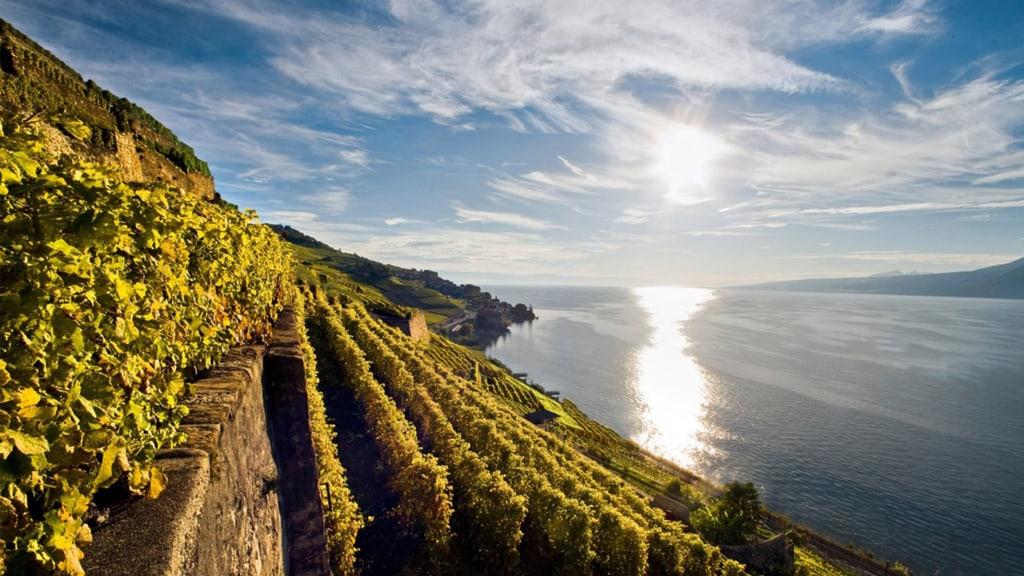 Blick auf Weingut und See